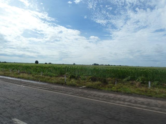 fields and fields of corn