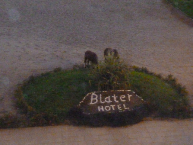 Horses grazing in front of the hotel
