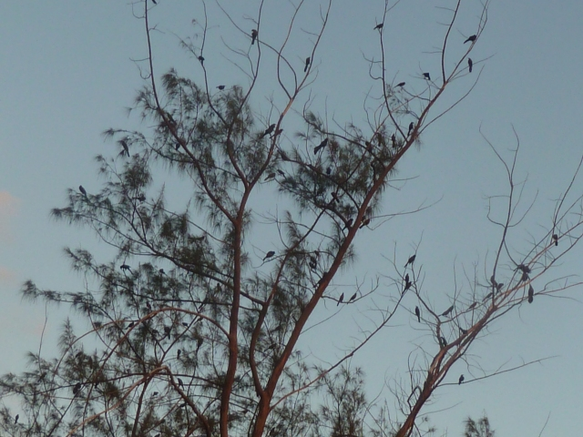 Birds in a tree - wish you could hear the song they sing!