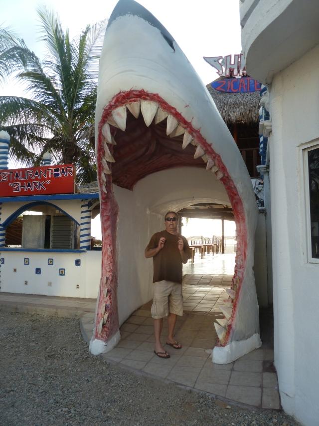 Shark bate