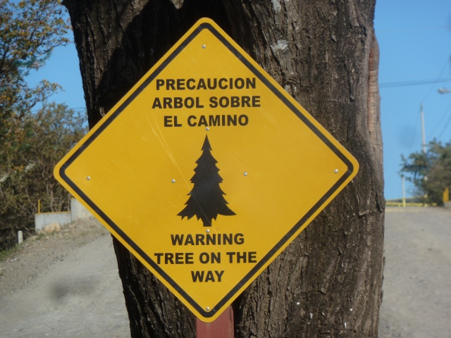 Tree on the way - be careful!