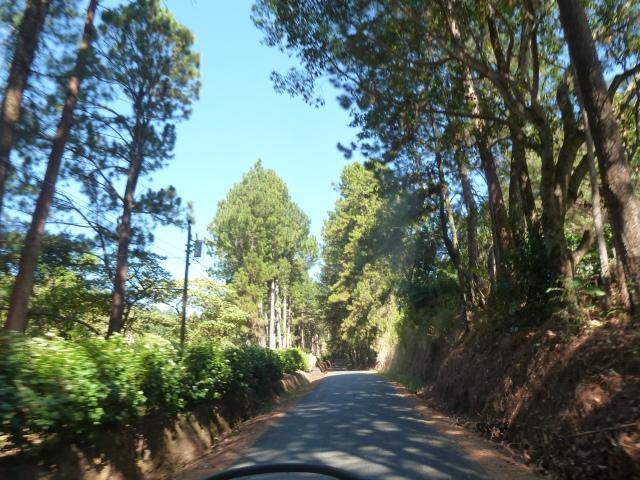 riding through the coffee groves above Boquete, Panama