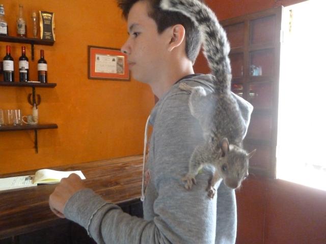 Coco the squirrel, Honduras