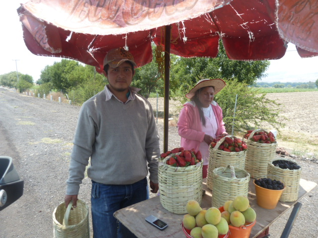 Berries for sale on the side of the toll road, Mexico