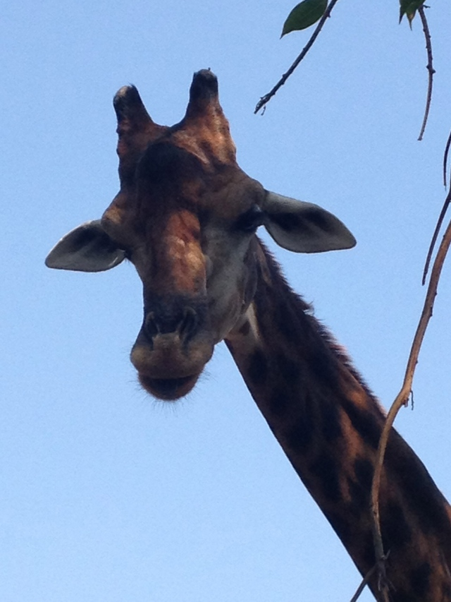 Bangkok, Dusit Zoo