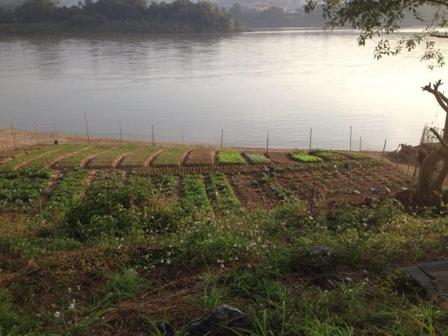 crops along Mekong River Thailand