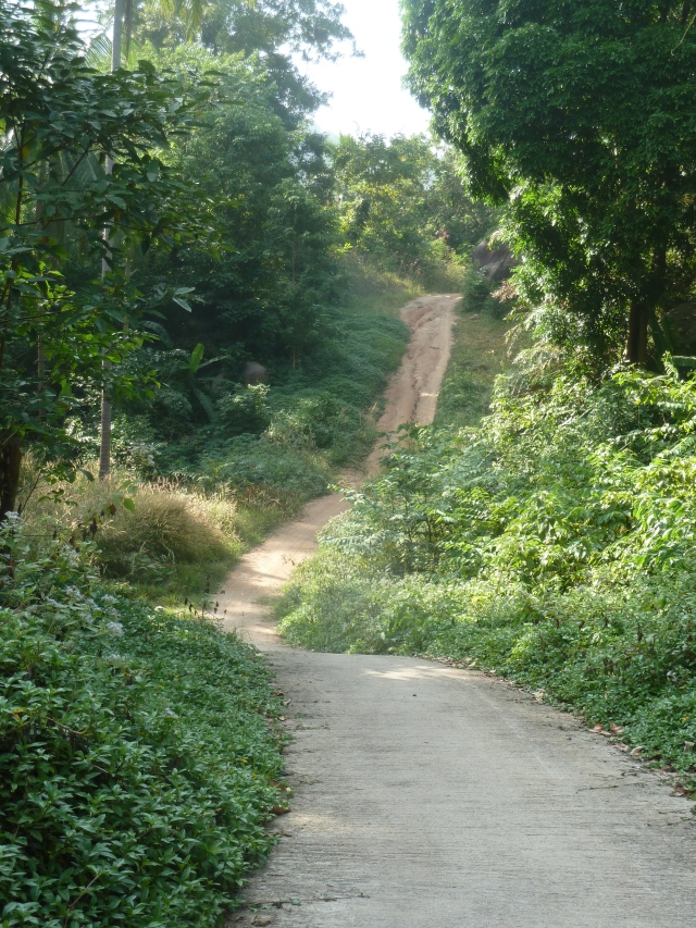 Jungle ride to Mango Bay