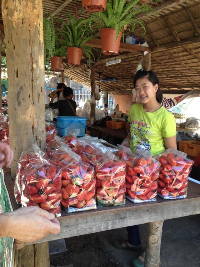 Strawberries, Doi Ithanon National Park, Thailand