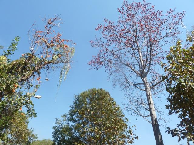 Doi Ithanon National Park, Thailand
